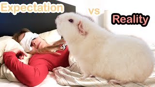 Owning Guinea Pigs: Expectations vs. Reality