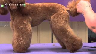 Miniature Poodle Lamb Trim Grooming Guide - Pro Groomer