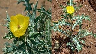 इस पौधे की एक पत्ती दूर कर देती है बांझपन, बिना महंगे इलाज के घर मे गूंज उठती है किलकारी