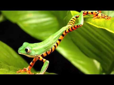 Ojai, California Frogs - Summer 2009
