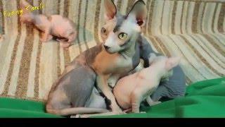 Кошки с котятами