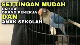 Download lagu Settingan lovebird full krodong single fighter