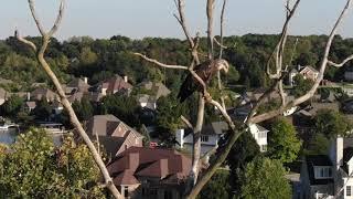 Bald Eagle at Geist (Hoosier Wildlife Series)