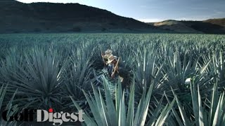 60 Hands – The Patrón Tequila Story