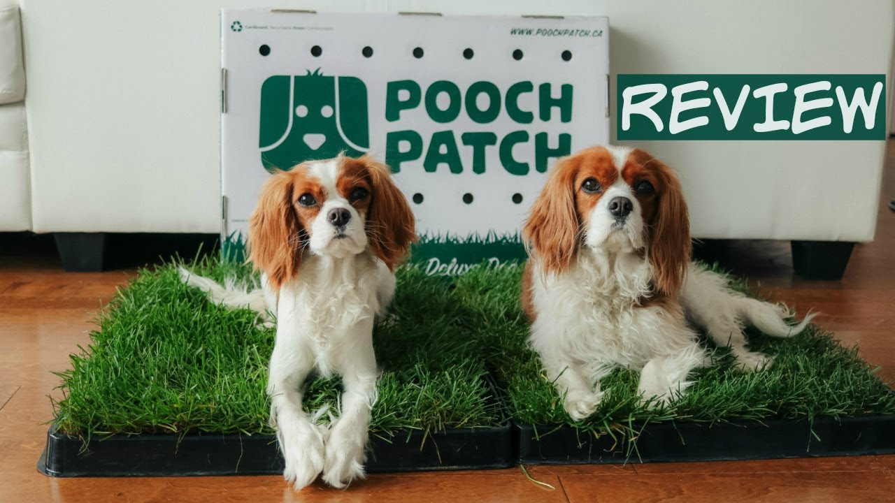 Pooch Patch Review 100 Real Grass Dog Potty Training