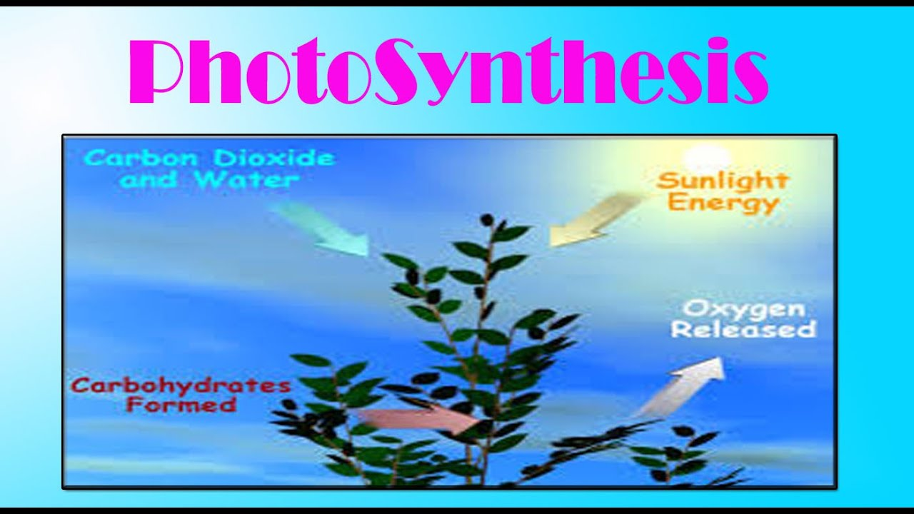 an overview of the basics of photosynthesis in plant life For life on earth explain why photosynthesis is so  the basics of photosynthesis 6 co2 + 6  adp + p an overview of photosynthesis.