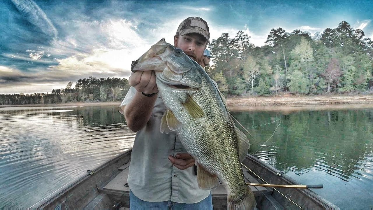 Fall bass fishing with jerk baits clarks hill lake 2016 for Clarks hill fishing report