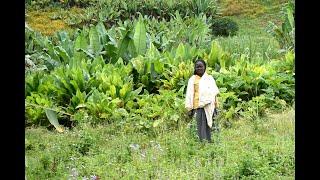 Äthiopien: Öko-Landbau schafft Perspektiven für Kleinbauern