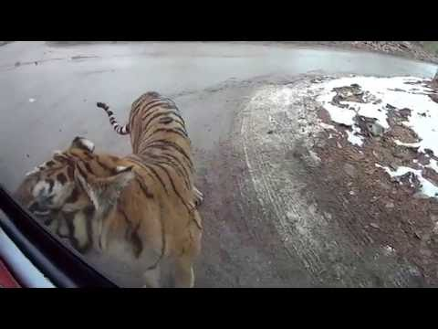 safari park everland resort in Korea (part 1)