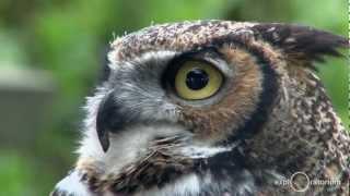Owls I Science in the City I Exploratorium