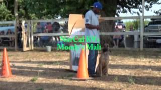 Norcal K9's Box Training