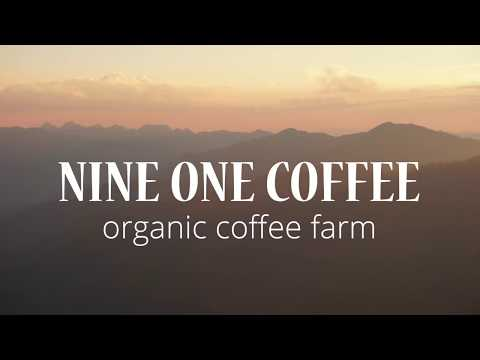 Nine One Coffee – organic coffee farm in the north of Thailand