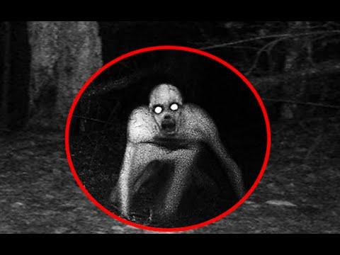 Unexplained Creatures 5 Mysterious & ...