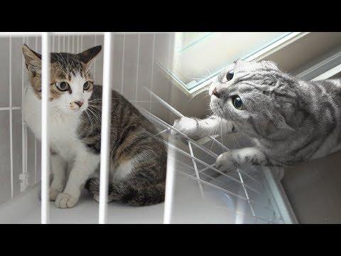 7번째 새로운 고양이 등장! 고양이들 반응【수리노을 SURI&NOEL】