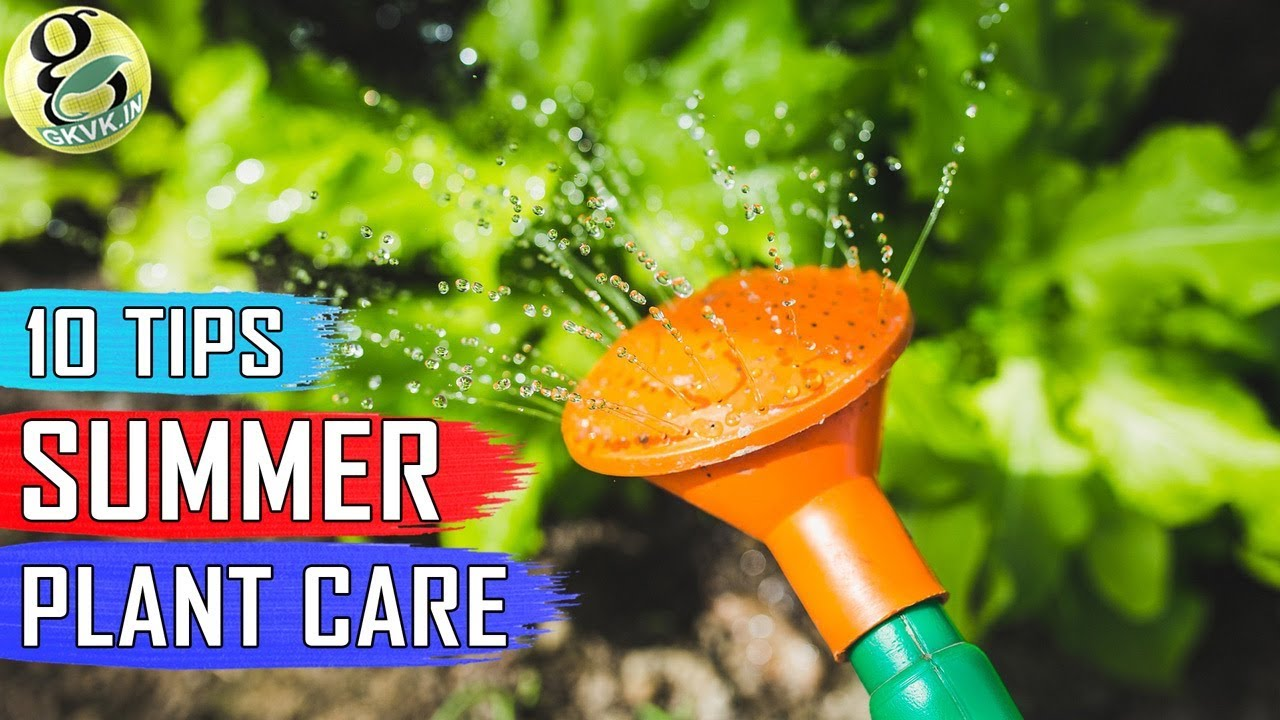SUMMER GARDENING TIPS: 10 Tips On How To Take Care Of Your Plants In Summer  Season