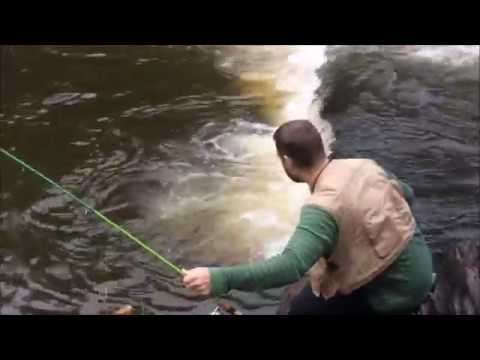 World Class Trout Fishing on the North Branch Potomac