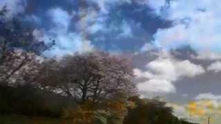 Der Nussbaum The Nut Tree Schumann Janette Miller Thumbnail