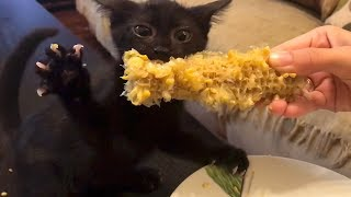 Black Kitten's Unbelievable Reaction To Corn