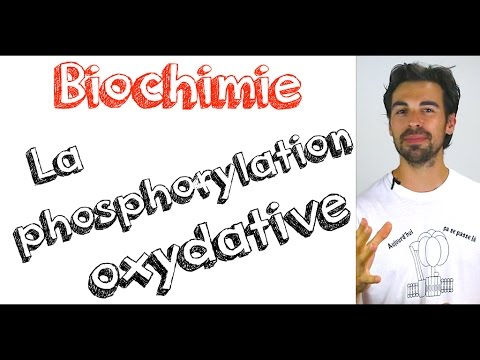 Cours de biochimie: la phosphorylation oxydative
