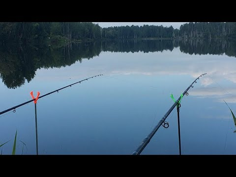 Рыбалка в июне с фидером (метод флэт). Подлещик, плотва