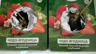 ЧУДО-ЯГОДНИЦА