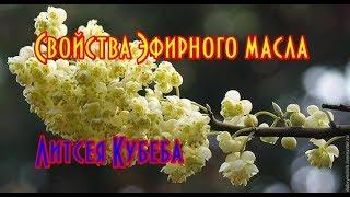 Эфирное масло Литсея Кубеба//Видео обзор эфирные масла от Мыло опт