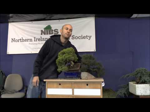 Peter Warren Bonsai Workshop - Phil's Juniper