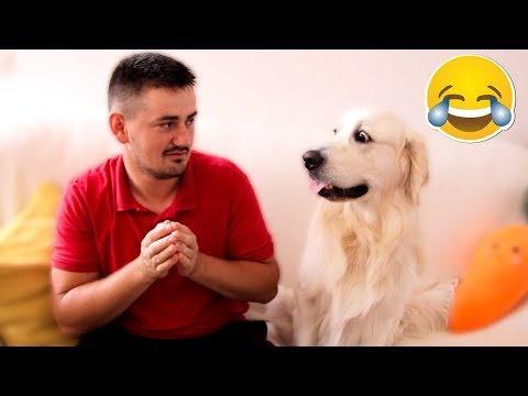 Funny Dog Reaction to Different Human Sounds [BEST REACTION]