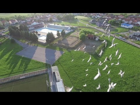 Pigeons attack drone - DJI Phantom 3 Advanced *Cool sound effect*