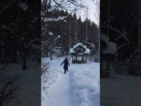 Отдых в Белокурихе. Жар-птица активно прогуливается по теренкуру. Февраль 2019.