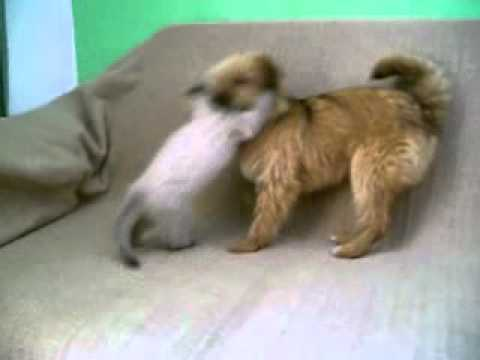 cani e gatti il litigio youtube