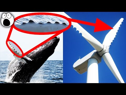 Top 15 Most Amazing Technologies Inspired by Nature