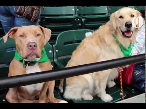 dogs-take-over-portland-timbers-game-for-t2-s-bark-in-the-park