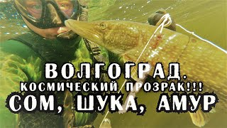 Подводная охота в Волгограде космический прозрак взяты трофеи СОМ щука сазан амур