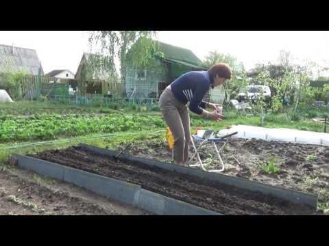 Огурцы дружат с кукурузой и укропом