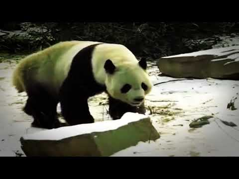 5 Most Shocking Moments Caught At The Zoo!
