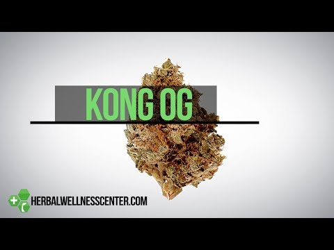 Kong OG strain review