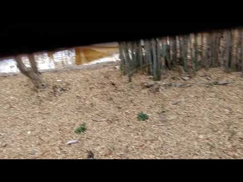Watch ta best video of Bangalore national park nd forest best video...like or secriube plz