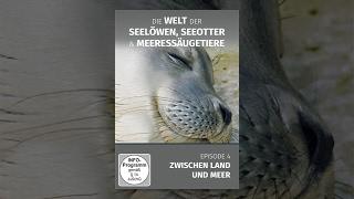 Die letzten Paradiese 12 - Seerobben & Seelöwen E04 Zwischen Land und Meer