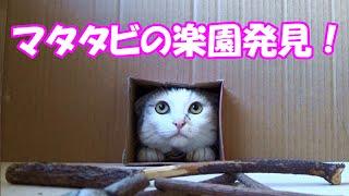 狭いトンネルを潜る猫、そこにはなんとマタタビの楽園が!? Cat found valerian after a narrow tunnel thumbnail