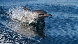 wild-dolphin-caught-on-camera