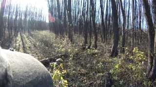 Осенняя охота на вальдшнепа с собакой