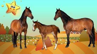 Домашние Животные и их Детеныши - Развивающие Мультики для Детей