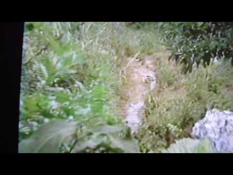 Gansos Sinaleiros, reportagem de Louri Ferreira no programa Manchete Rural, 1990