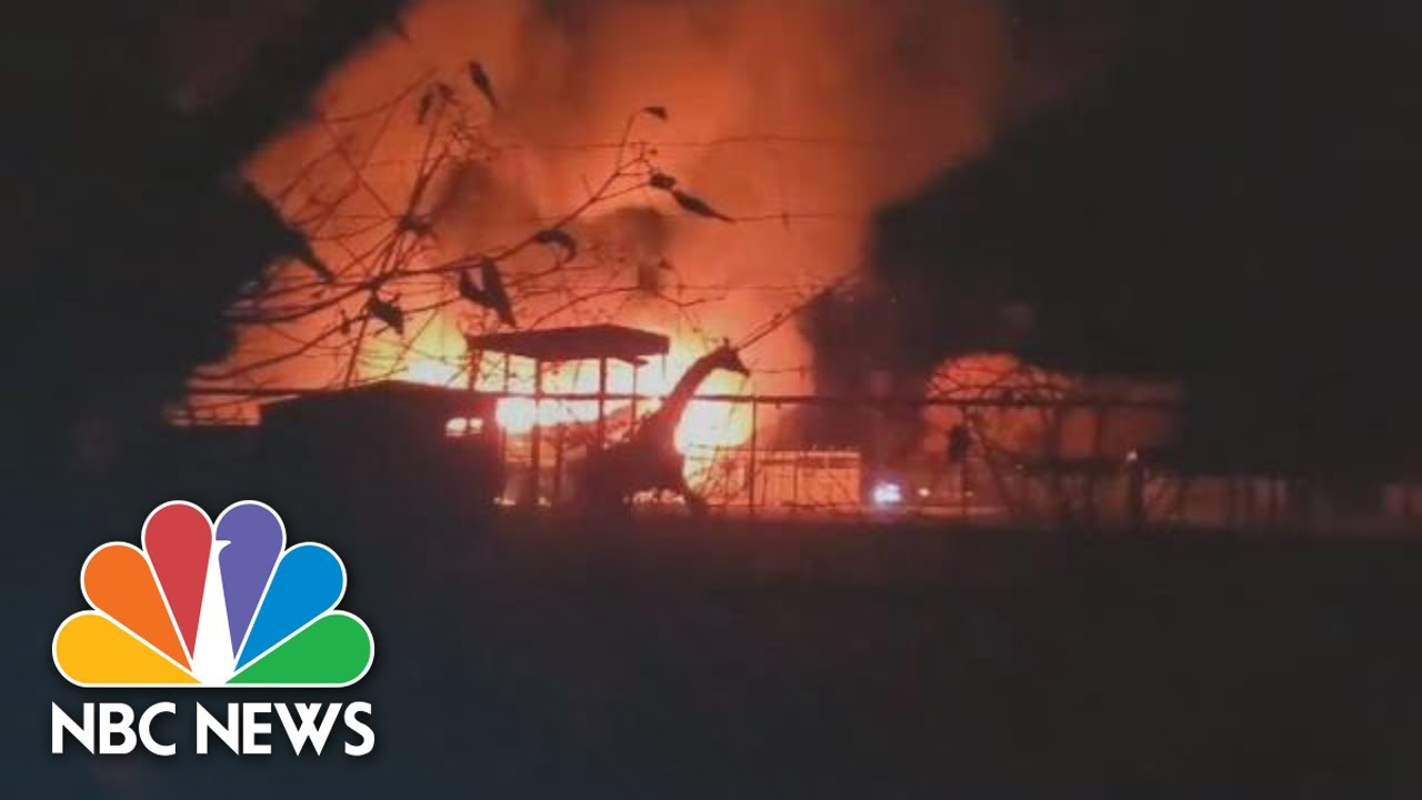 Giraffes Escape Fire That Kills 10 Animals In Ohio Wildlife Park | NBC News