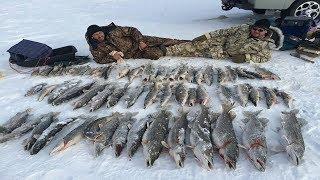 Рыбалка в Казахстане. Жерех. Балхаш