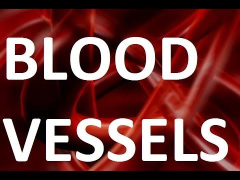 How Long Will Your Blood Vessels Stretch?