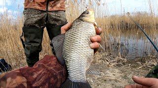 КАРАСЬ КАМЫШ ВЕСНА ЛОВЛЯ КАРАСЯ НА БОКОВОЙ КИВОК рыбалка на карася 2021