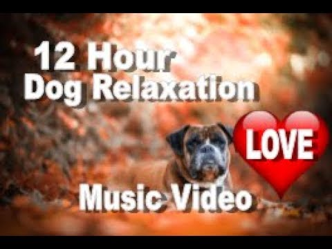 Dog Relaxation 12 Hours of Video Music Compilation For the Anxious Dog