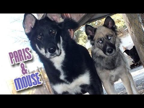 Paris & Mouse at Local Dog Rescue
